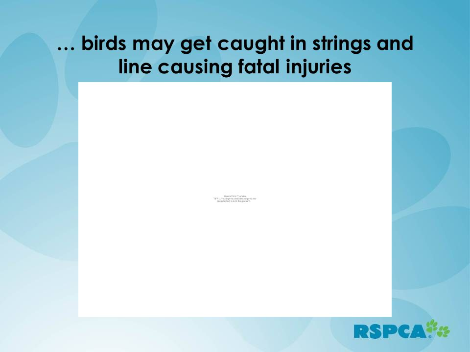 … birds may get caught in strings and line causing fatal injuries