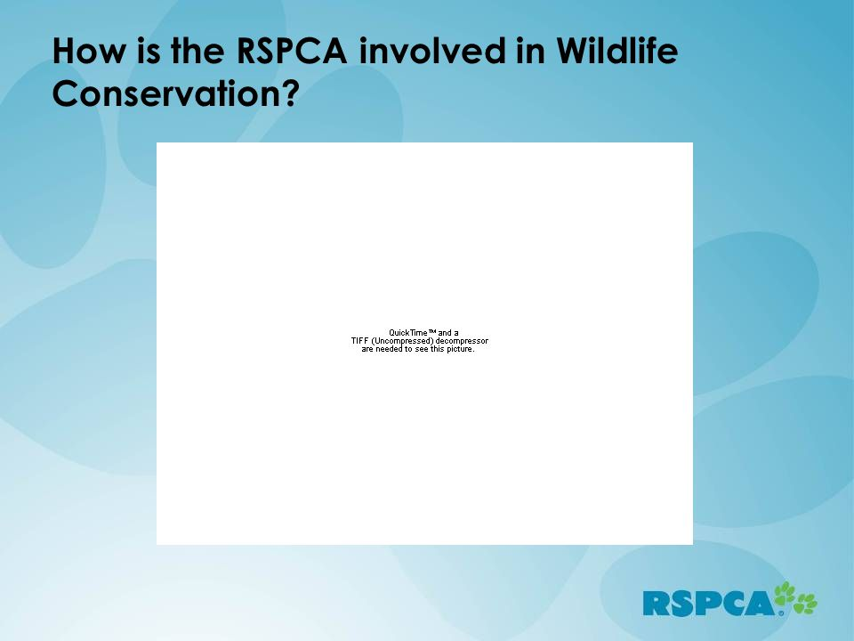 How is the RSPCA involved in Wildlife Conservation?