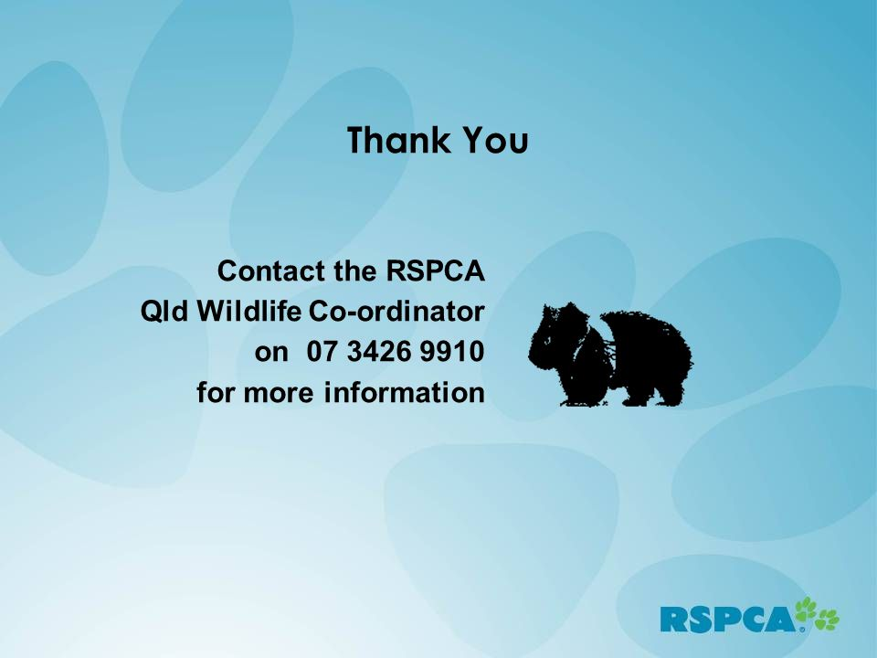 Thank You Contact the RSPCA Qld Wildlife Co-ordinator on 07 3426 9910 for more information