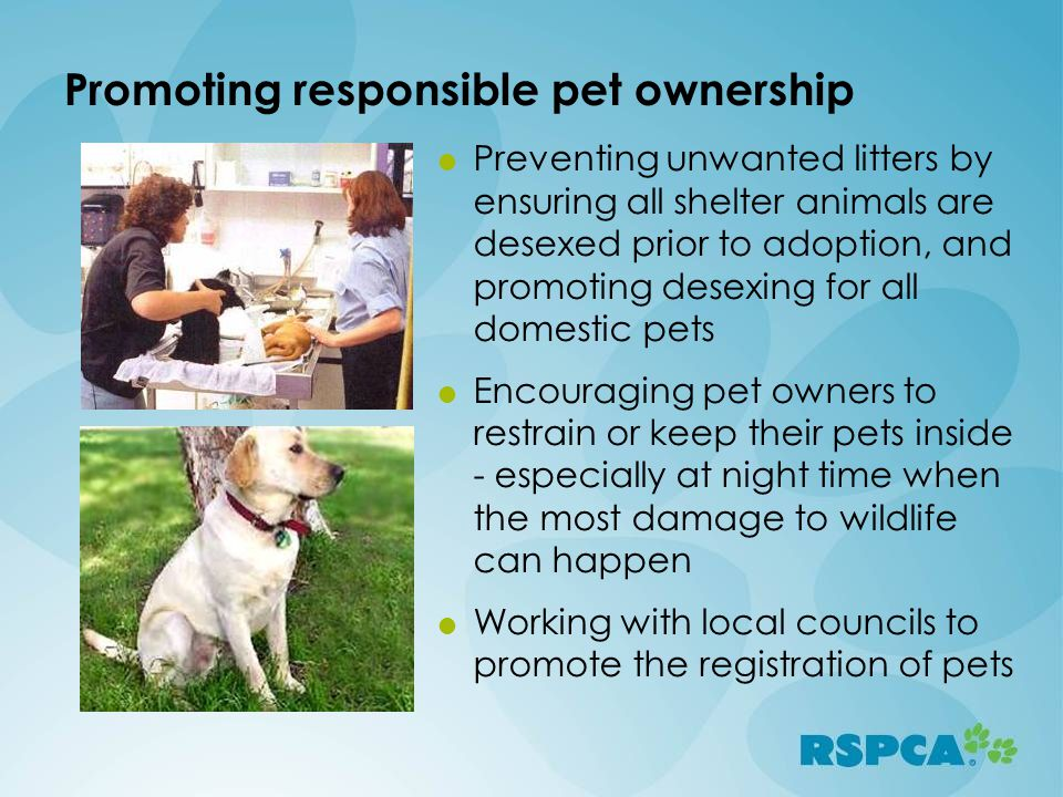 Promoting responsible pet ownership  Preventing unwanted litters by ensuring all shelter animals are desexed prior to adoption, and promoting desexing for all domestic pets  Encouraging pet owners to restrain or keep their pets inside - especially at night time when the most damage to wildlife can happen  Working with local councils to promote the registration of pets
