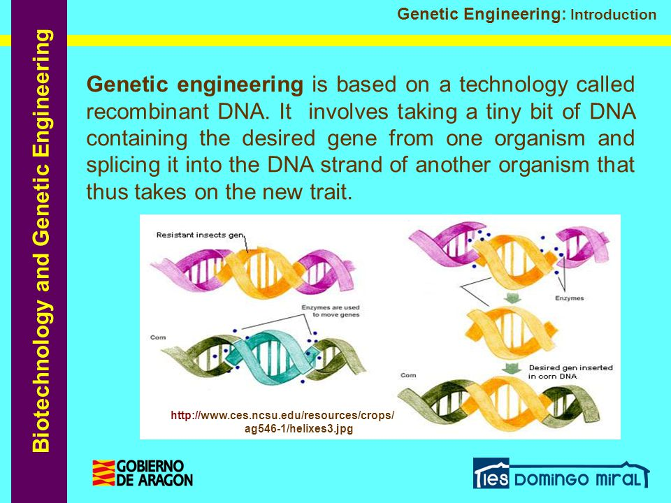 Biotechnology and Genetic Engineering Genetic Engineering: Introduction Genetic engineering is based on a technology called recombinant DNA. It involv
