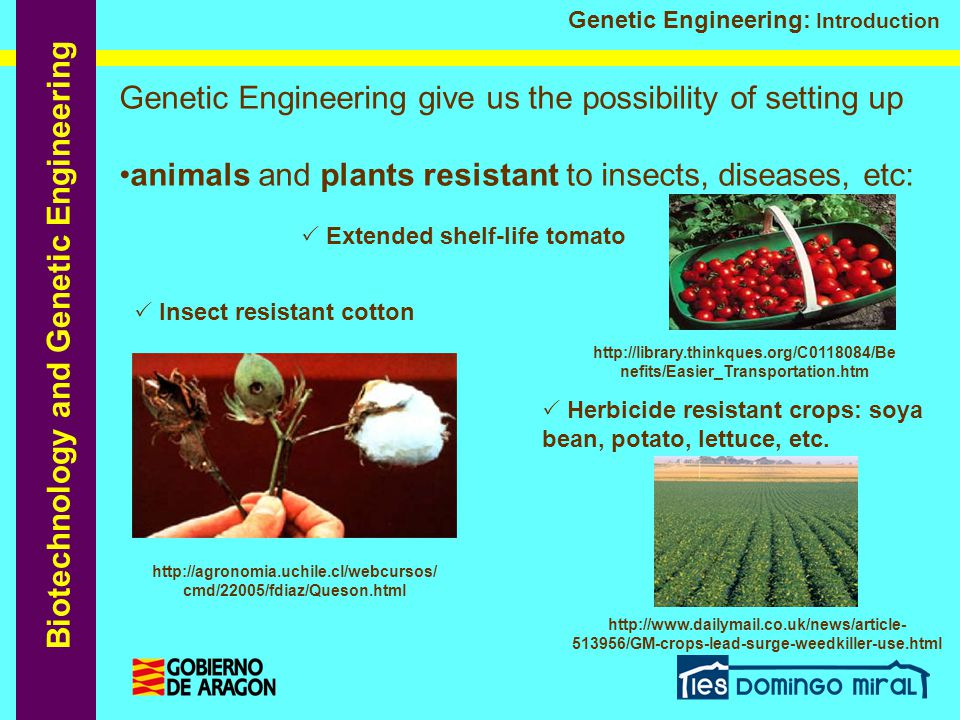 Biotechnology and Genetic Engineering Genetic Engineering: Introduction  Golden Rice – with high level of Vitamin A Plants with increased vitamins and nutrients content: Drugs, human proteins and new materials expressed in milk:  Spider silk produced by goats used to make soft-body bullet proof vests http://www.abc.net.au/science/new s/stories/s461157.htm http://www.atdforum.org/spip.php?article126