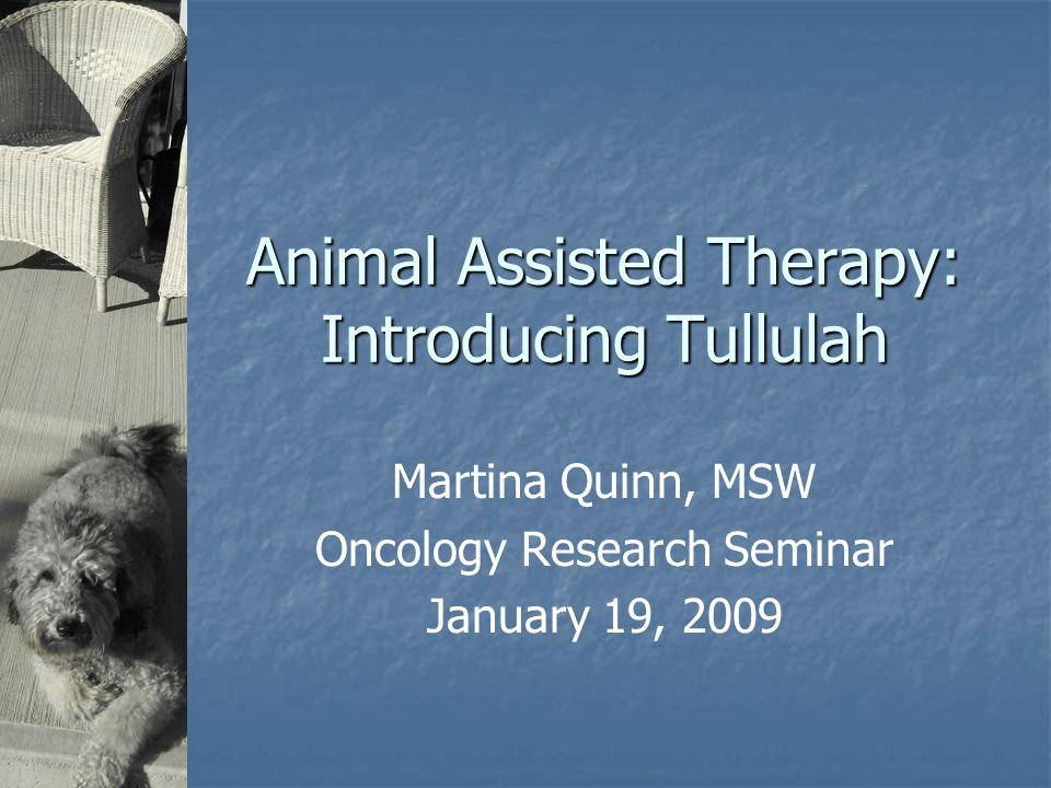 Animal Assisted Therapy: Introducing Tullulah Martina Quinn, MSW Oncology Research Seminar January 19, 2009