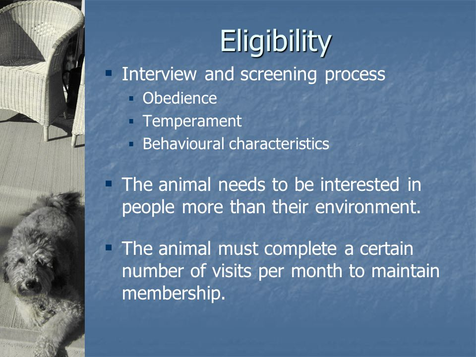 Eligibility  Interview and screening process  Obedience  Temperament  Behavioural characteristics  The animal needs to be interested in people more than their environment.