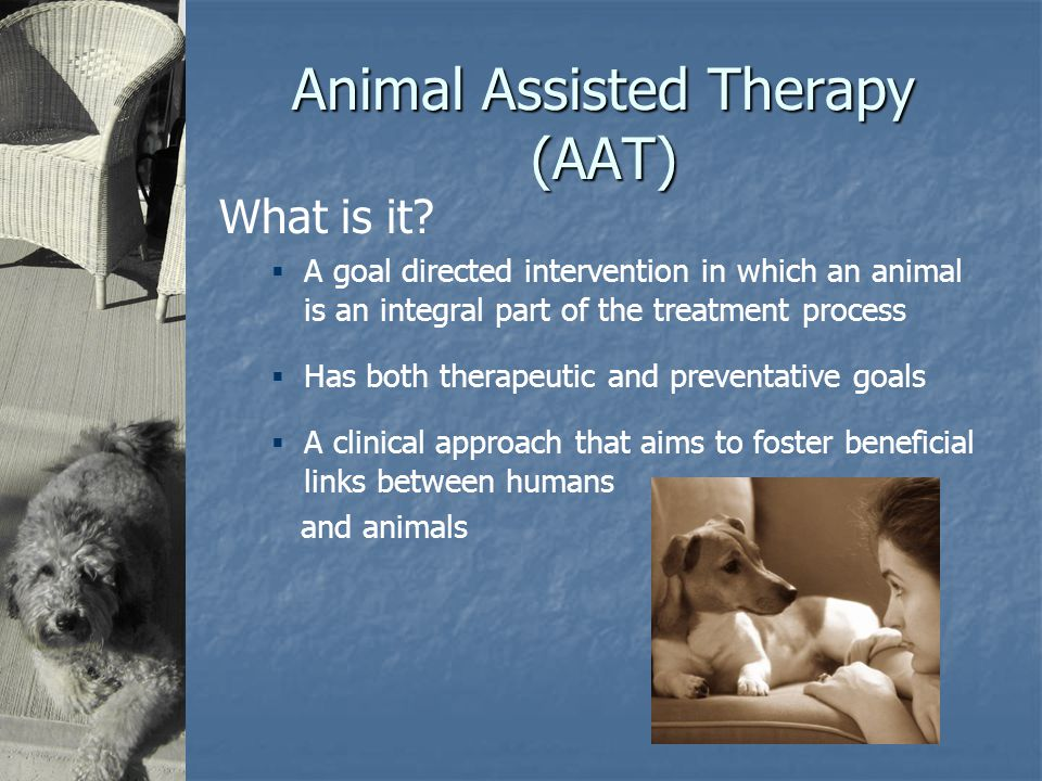 Animal Assisted Therapy (AAT) What is it.