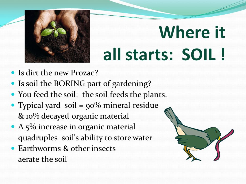 Where it all starts: SOIL . Is dirt the new Prozac.