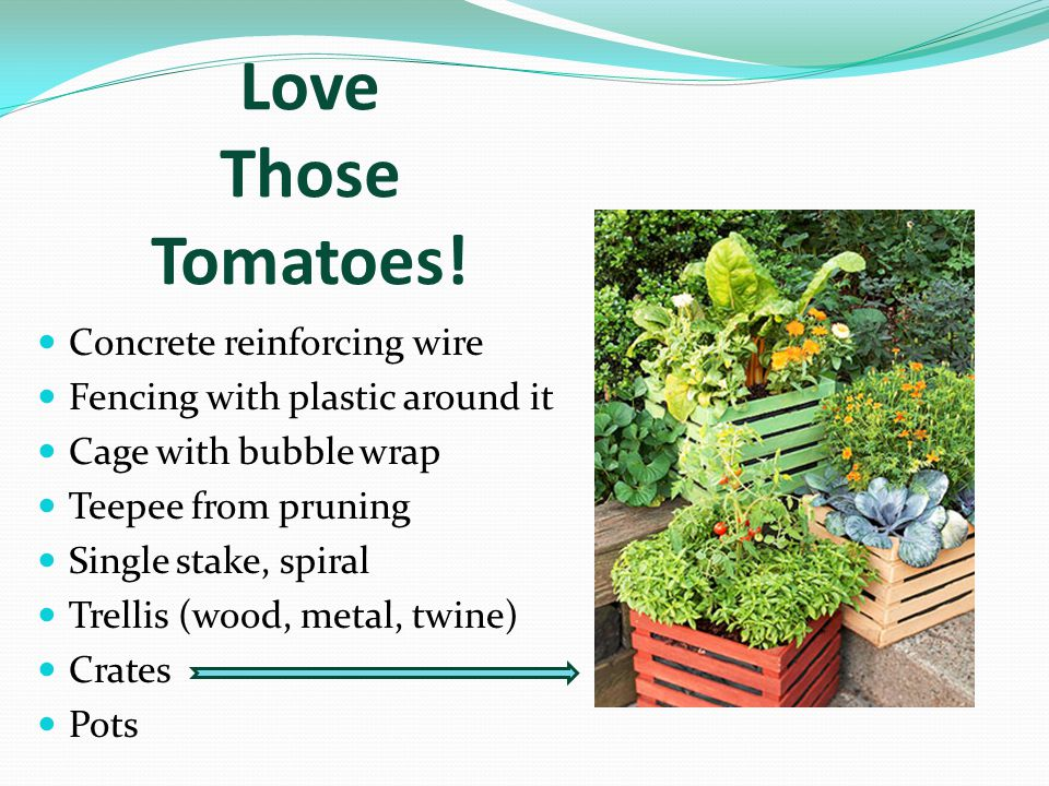 Love Those Tomatoes.