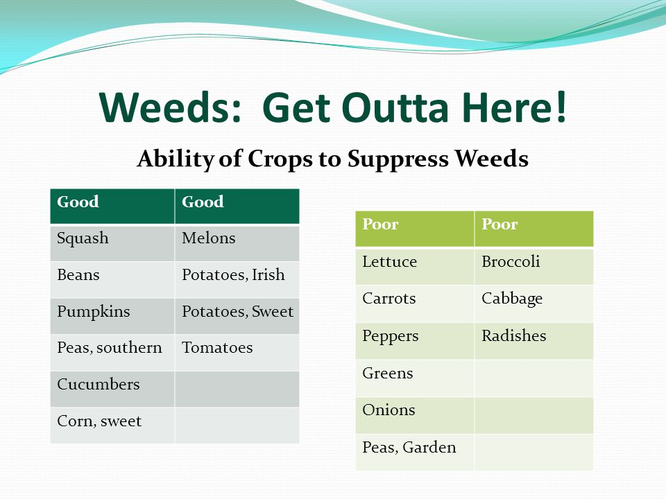 Weeds: Get Outta Here.