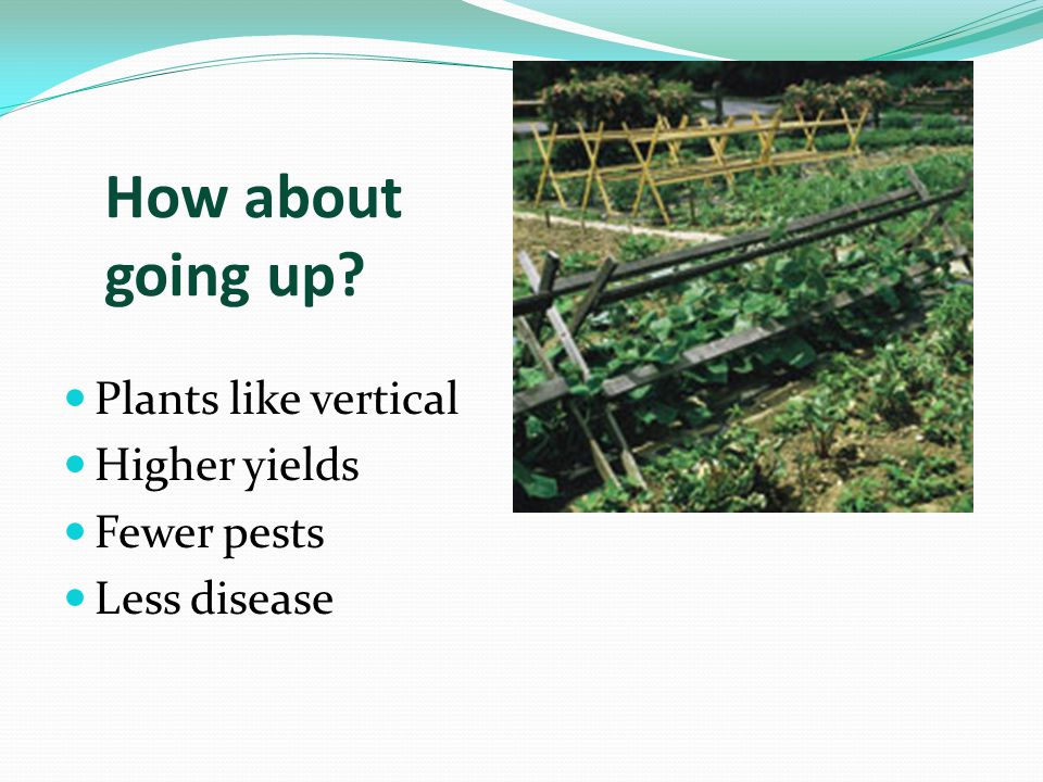 How about going up Plants like vertical Higher yields Fewer pests Less disease