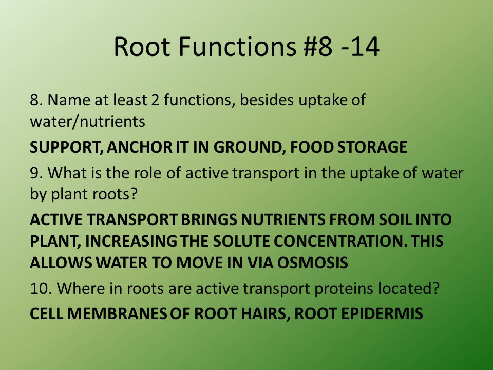 Root Functions #8 -14 8.