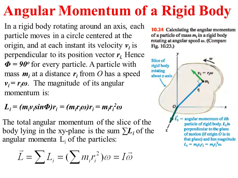 In a rigid body rotating around an axis, each particle moves in a circle centered at the origin, and at each instant its velocity v i is perpendicular