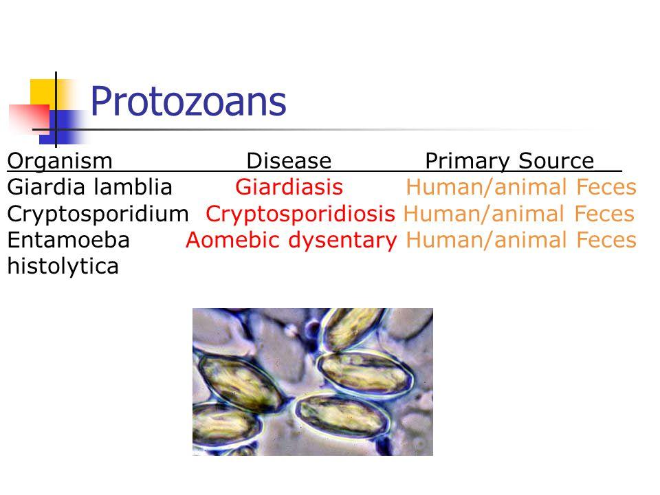 Protozoans Organism Disease Primary Source__ Giardia lamblia Giardiasis Human/animal Feces Cryptosporidium Cryptosporidiosis Human/animal Feces Entamoeba Aomebic dysentary Human/animal Feces histolytica