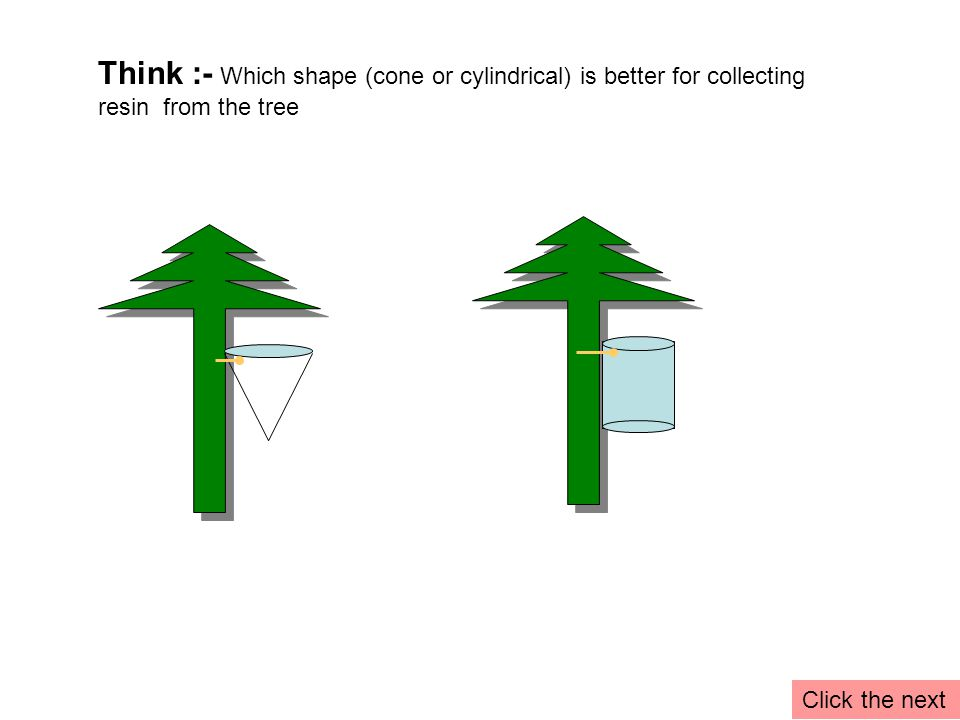 Think :- Which shape (cone or cylindrical) is better for collecting resin from the tree Click the next