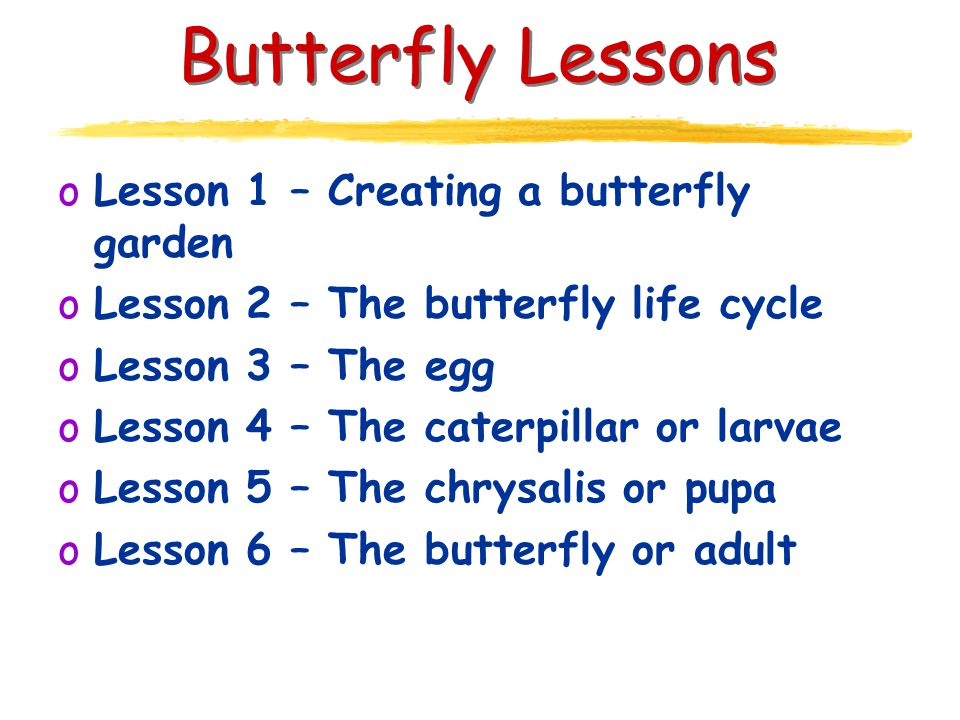 Butterfly Lessons oLesson 1 – Creating a butterfly garden oLesson 2 – The butterfly life cycle oLesson 3 – The egg oLesson 4 – The caterpillar or larvae oLesson 5 – The chrysalis or pupa oLesson 6 – The butterfly or adult