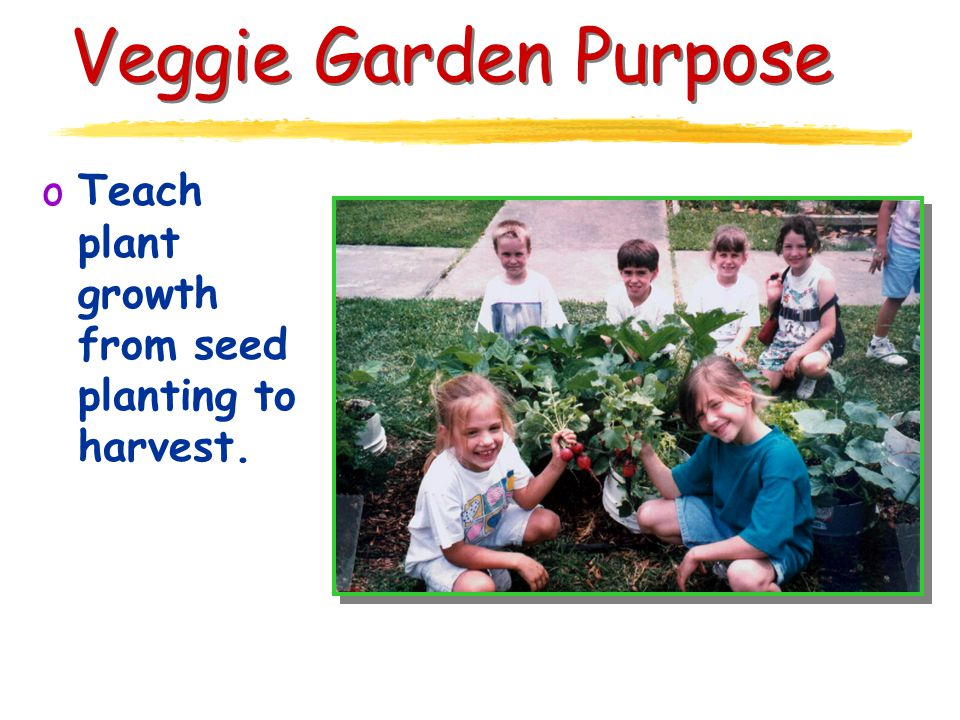 Veggie Garden Purpose oTeach plant growth from seed planting to harvest.