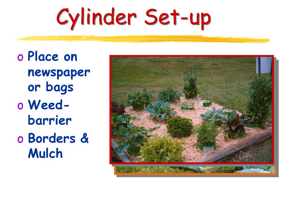 Cylinder Set-up oPlace on newspaper or bags oWeed- barrier oBorders & Mulch