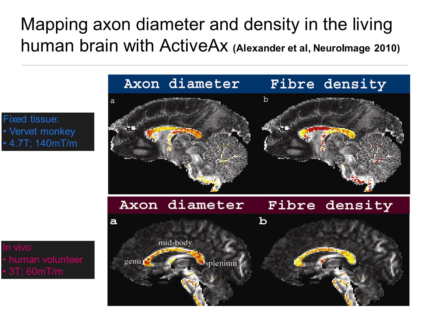 Mapping axon diameter and density in the living human brain with ActiveAx (Alexander et al, NeuroImage 2010) Fixed tissue: Vervet monkey 4.7T; 140mT/m In vivo: human volunteer 3T; 60mT/m