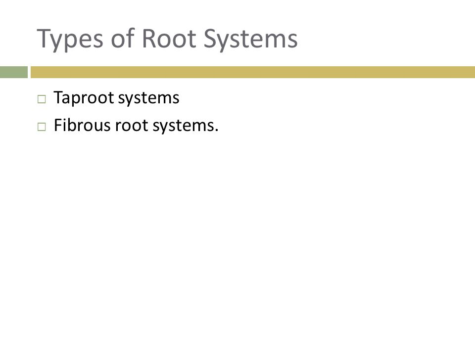 Types of Root Systems  Taproot systems  Fibrous root systems.