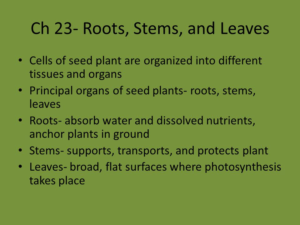 Sec 3- Stems What are the main functions of stems.