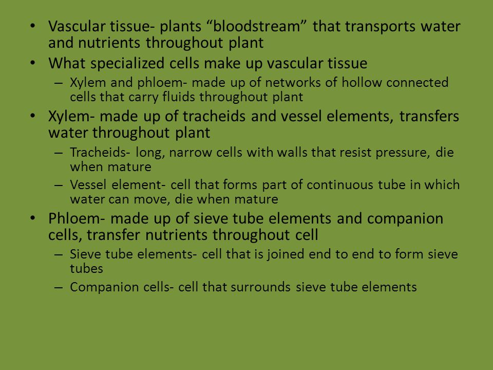 "Vascular tissue- plants ""bloodstream"" that transports water and nutrients throughout plant What specialized cells make up vascular tissue – Xylem and"