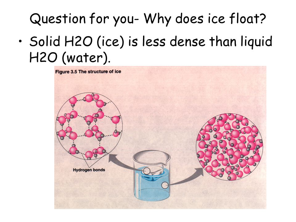 Question for you- Why does ice float? Solid H2O (ice) is less dense than liquid H2O (water).