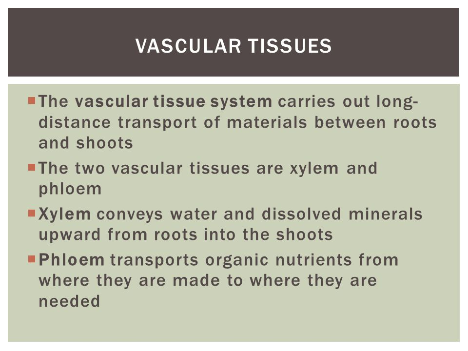  The vascular tissue system carries out long- distance transport of materials between roots and shoots  The two vascular tissues are xylem and phloe