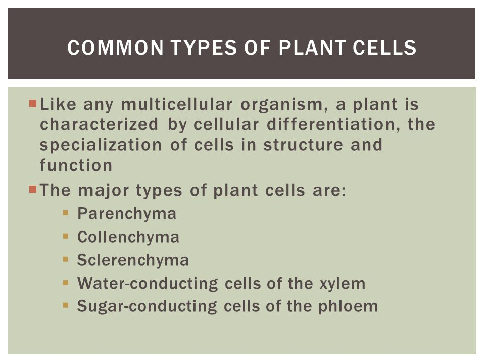  Like any multicellular organism, a plant is characterized by cellular differentiation, the specialization of cells in structure and function  The m