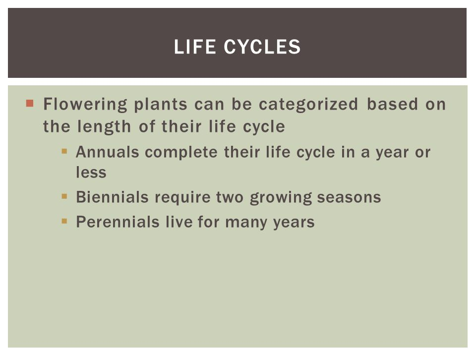  Flowering plants can be categorized based on the length of their life cycle  Annuals complete their life cycle in a year or less  Biennials requir