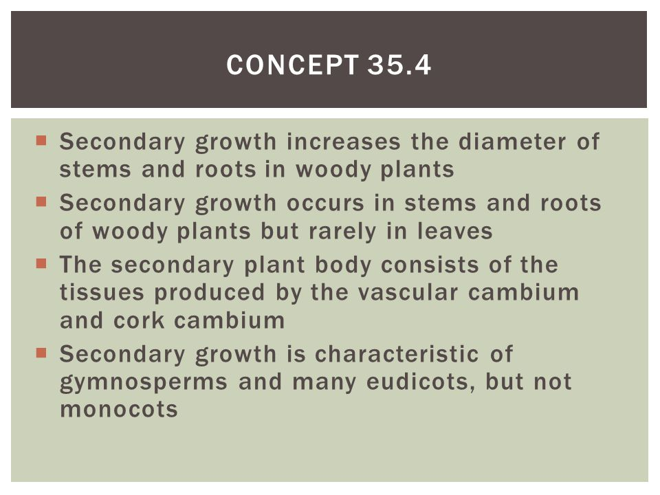 Secondary growth increases the diameter of stems and roots in woody plants  Secondary growth occurs in stems and roots of woody plants but rarely i