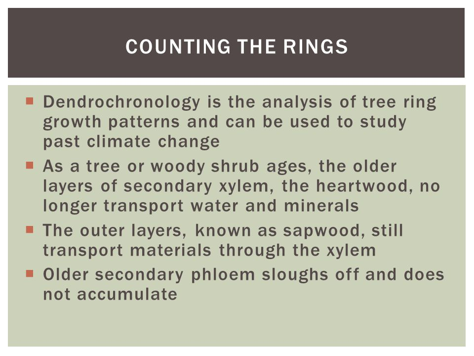  Dendrochronology is the analysis of tree ring growth patterns and can be used to study past climate change  As a tree or woody shrub ages, the olde