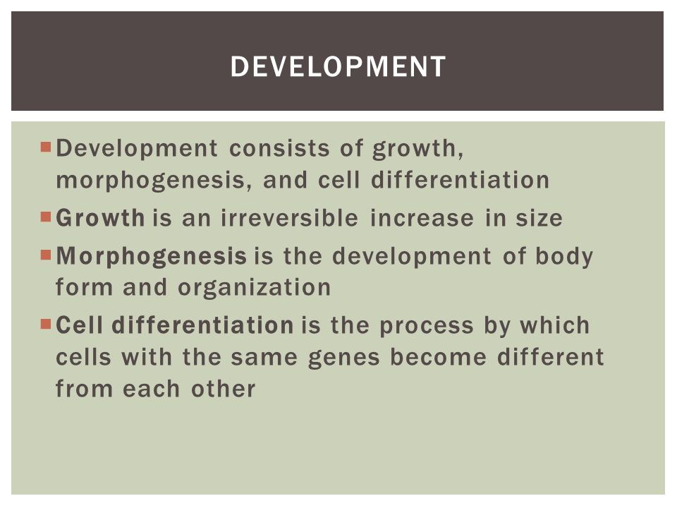  Development consists of growth, morphogenesis, and cell differentiation  Growth is an irreversible increase in size  Morphogenesis is the developm
