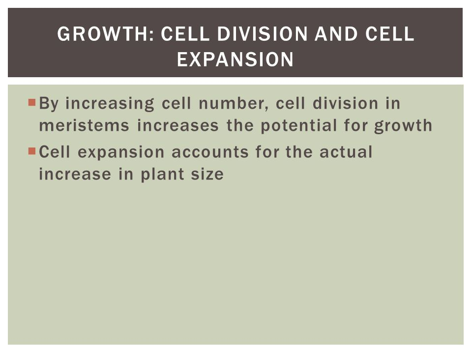  By increasing cell number, cell division in meristems increases the potential for growth  Cell expansion accounts for the actual increase in plant