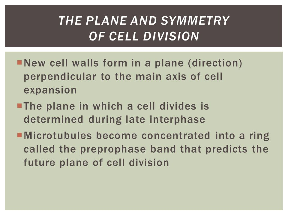  New cell walls form in a plane (direction) perpendicular to the main axis of cell expansion  The plane in which a cell divides is determined during