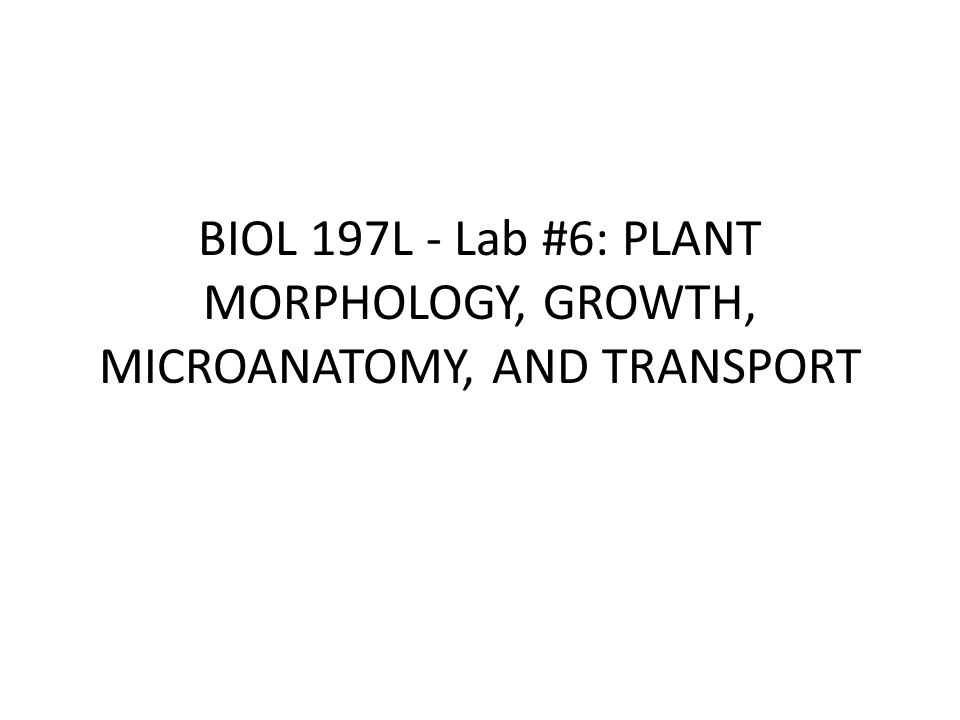 BIOL 197L - Lab #6: PLANT MORPHOLOGY, GROWTH, MICROANATOMY, AND TRANSPORT