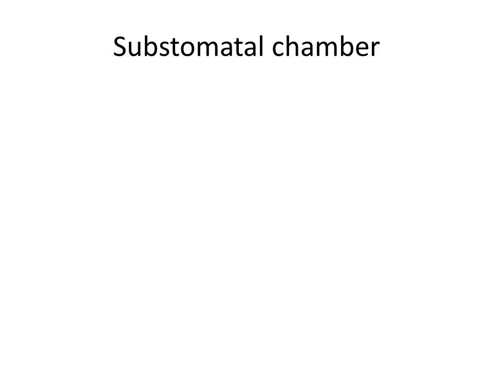 Substomatal chamber
