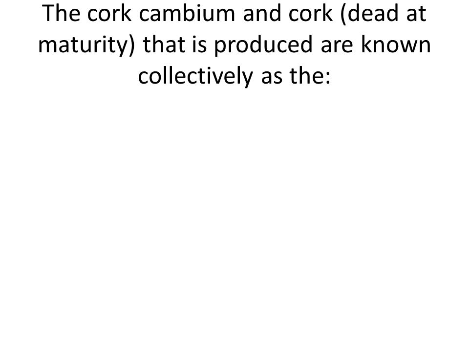 The cork cambium and cork (dead at maturity) that is produced are known collectively as the: