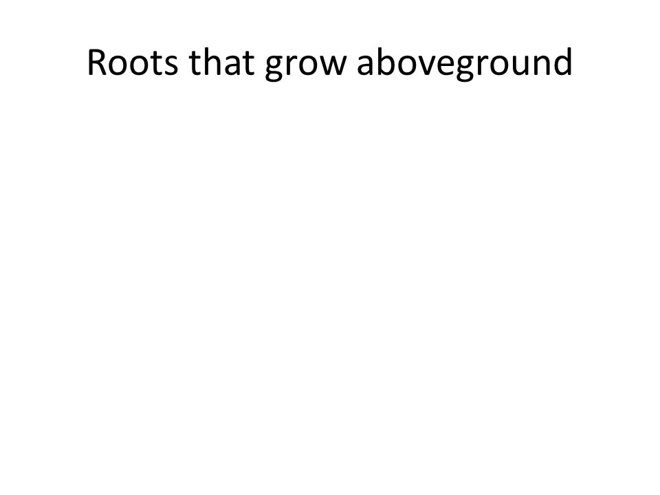 Roots that grow aboveground