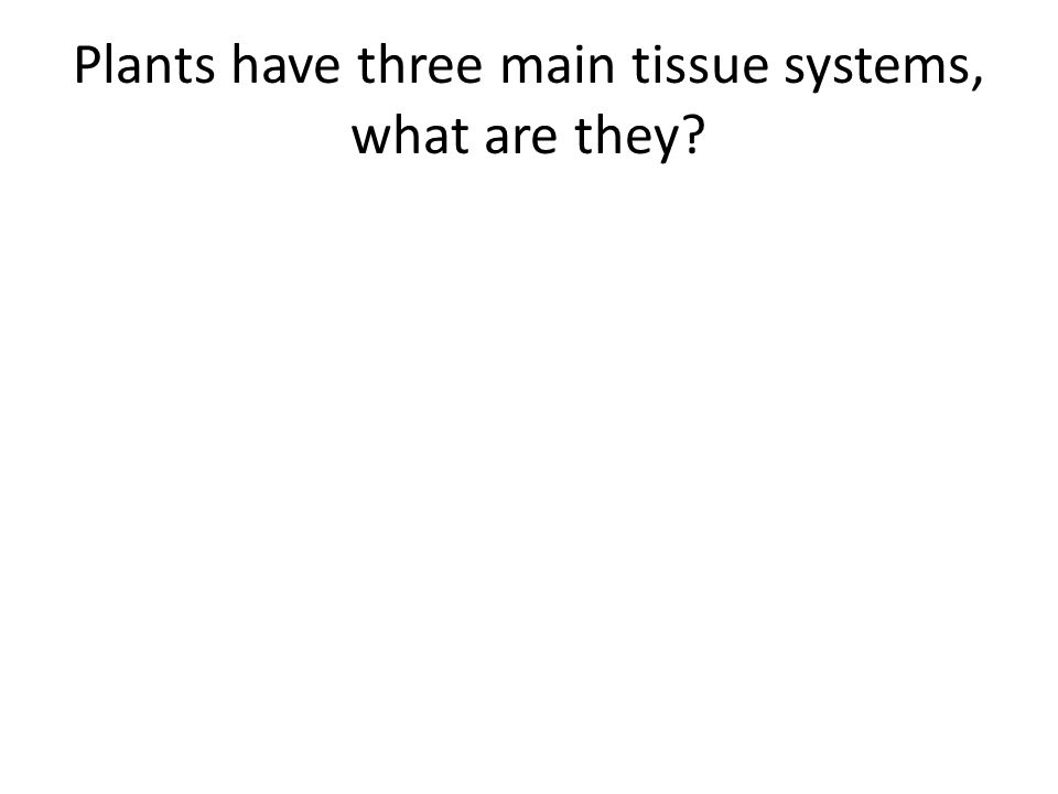 Plants have three main tissue systems, what are they