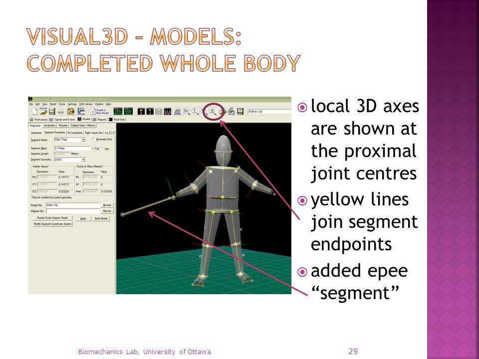 " local 3D axes are shown at the proximal joint centres  yellow lines join segment endpoints  added epee ""segment"" Biomechanics Lab, University of O"