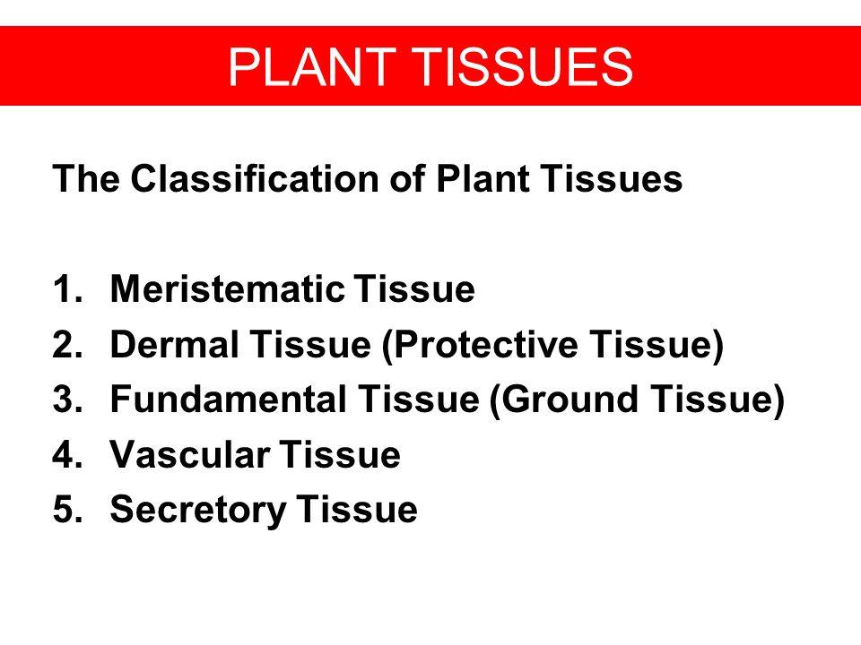PLANT TISSUES The Classification of Plant Tissues 1.Meristematic Tissue 2.Dermal Tissue (Protective Tissue) 3.Fundamental Tissue (Ground Tissue) 4.Vas