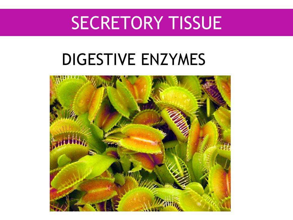 SECRETORY TISSUE DIGESTIVE ENZYMES