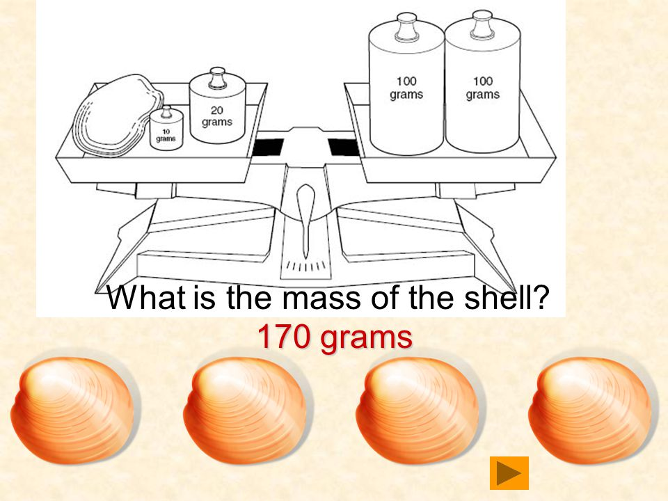What is the mass of the shell 170 grams