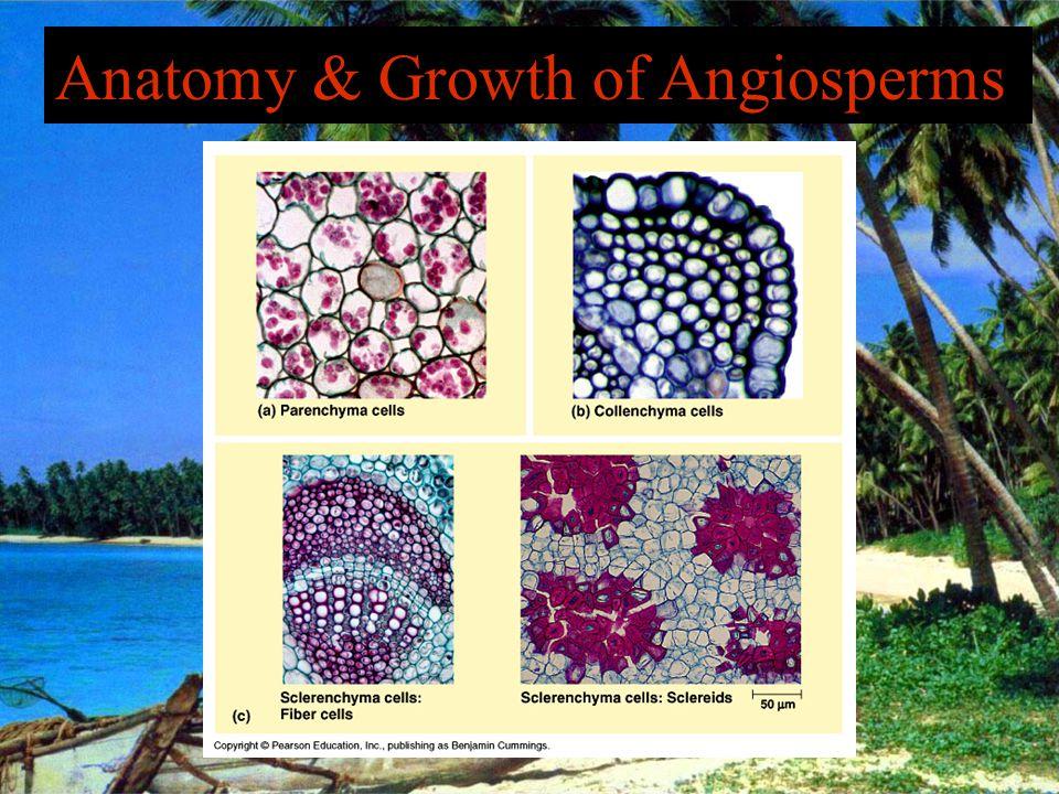 Anatomy & Growth of Angiosperms