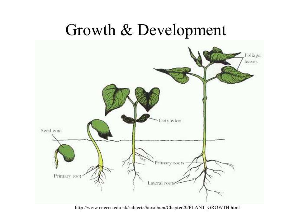 http://www.cneccc.edu.hk/subjects/bio/album/Chapter20/PLANT_GROWTH.html Growth & Development