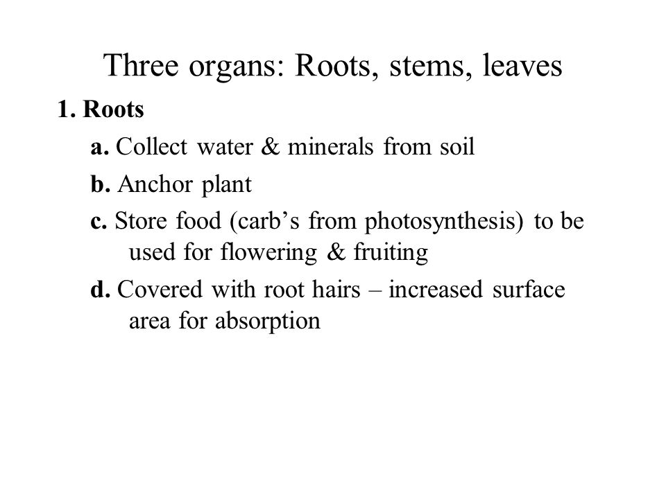Three organs: Roots, stems, leaves 1. Roots a. Collect water & minerals from soil b. Anchor plant c. Store food (carb's from photosynthesis) to be use