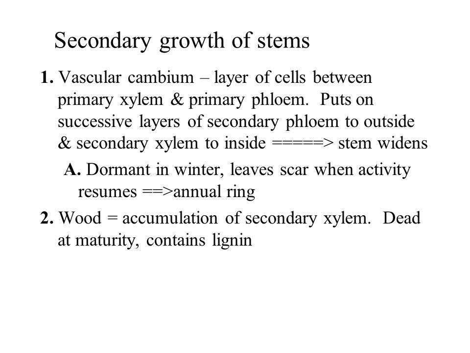Secondary growth of stems 1. Vascular cambium – layer of cells between primary xylem & primary phloem. Puts on successive layers of secondary phloem t