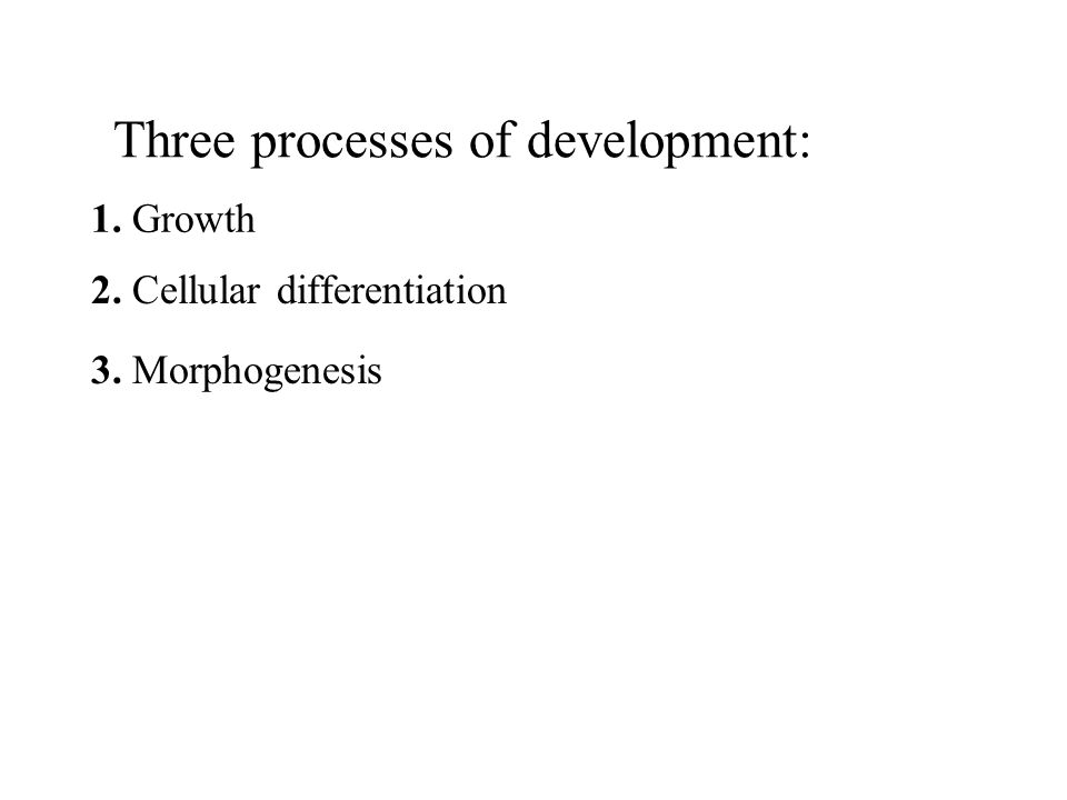 Three processes of development: 1. Growth 2. Cellular differentiation 3. Morphogenesis