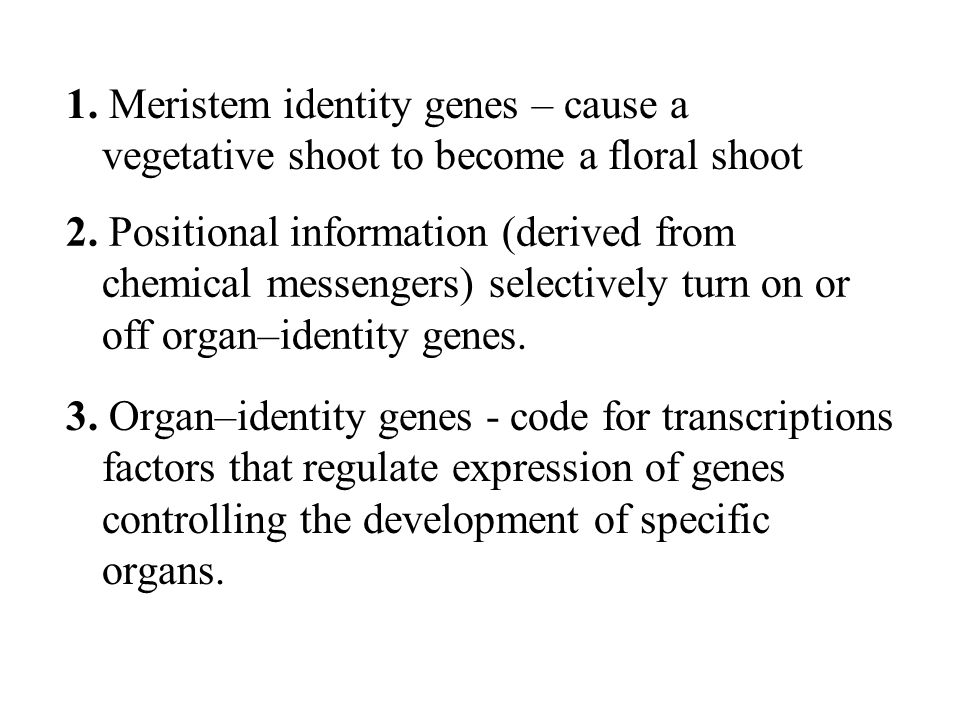 1. Meristem identity genes – cause a vegetative shoot to become a floral shoot 2. Positional information (derived from chemical messengers) selectivel