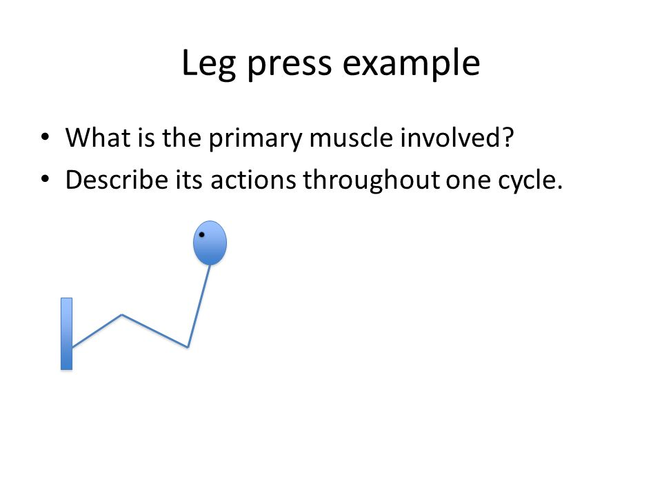 Leg press example What is the primary muscle involved? Describe its actions throughout one cycle.