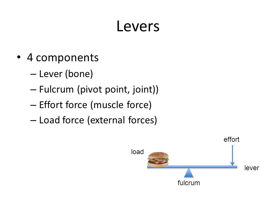 Levers 4 components – Lever (bone) – Fulcrum (pivot point, joint)) – Effort force (muscle force) – Load force (external forces) load fulcrum lever eff